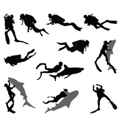 divers and sharks vector image