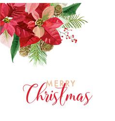 christmas winter poinsettia flowers card vector image