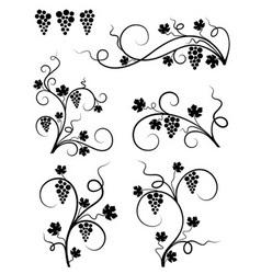 grape design elements vector image