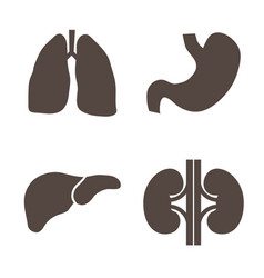 human organs silhouettes vector image