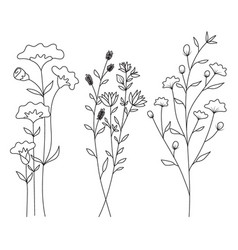 hand drawn of wild flowers isolated on white vector image