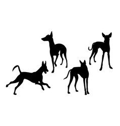 Ibizan hound dog silhouette 03 vector
