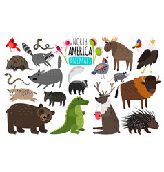 north american animals animal graphics of north vector image