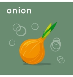 Onion on colorful background vector