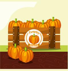Pumpkin vegetable always fresh in wood basket vector