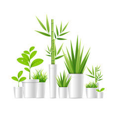 realistic detailed 3d green houseplant pot vector image