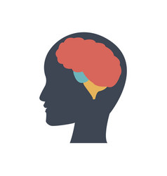 silhuette human head man with brain thinking vector image