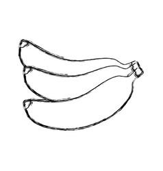 delicious bananas fruit vector image vector image