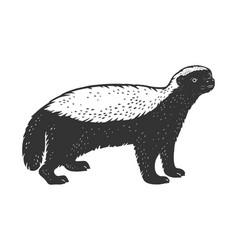 Honey badger ratel sketch vector