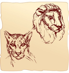 Lion and cheetah vector