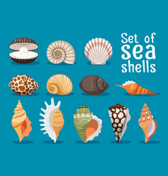 Sea shells flat icons set vector