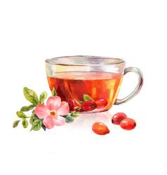 glass mug of herbal tea drink rosehip tea vector image vector image