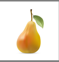 realistic of pear with leaf vector image vector image