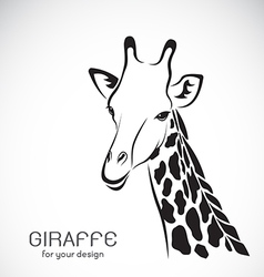 Giraffe head on white background vector