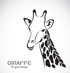 Giraffe head on white background vector image