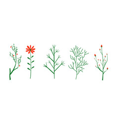 Herbs and plants set botanical elements vector