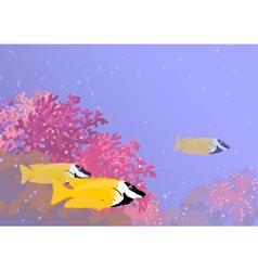Three foxface rabbitfish among the corals vector
