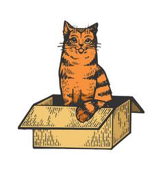 cat in box color sketch vector image