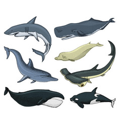 Blue whales marine creatures finback and vector