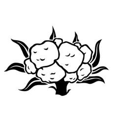 Cauliflower cabbage silhouette icon vector