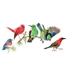 Cute colorful small birds sitting on twig on white vector