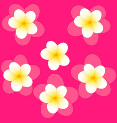 pattern of white jasmine on pink background vector image