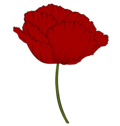Red poppy in a hand-drawn graphic style isolated vector