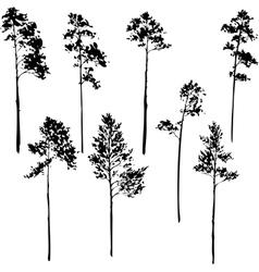 set pine trees vector image