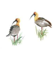beautiful hand drawn grey birds in grass on white vector image