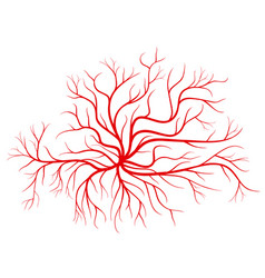 Human blood veins red vessels vector