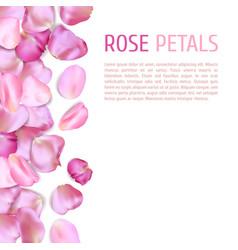Pink rose petals border vector
