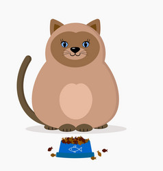 siamese cat with a cup of dry food vector image