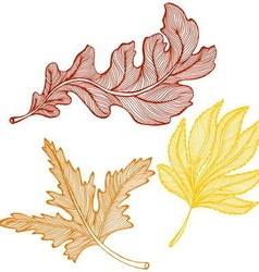 Autumn leaves drawing vector