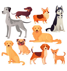 Dogs pets character labrador dog golden vector