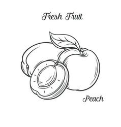 Hand drawn peach icon vector