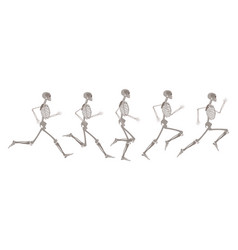 human skeleton in motion and runnning set vector image