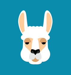 lama alpaca face isolated animal head vector image