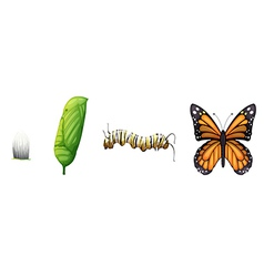 Life cycle a monarch butterfly vector