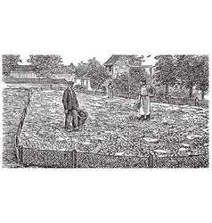 vintage engraving an escargot snail farm vector image
