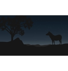 Zebra at night landscape silhouettes vector image