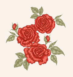 red rose flowers and leaves in vintage style hand vector image vector image