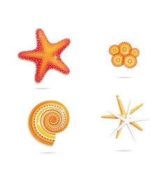 tropical sea stars vector image