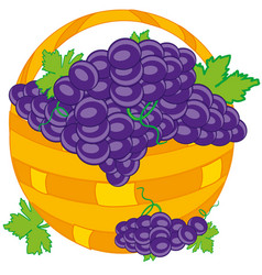 basket with grape vector image