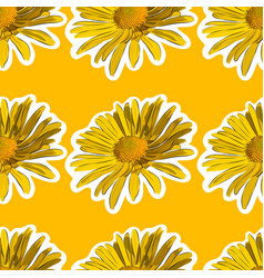 Chamomile flower seamless background vector
