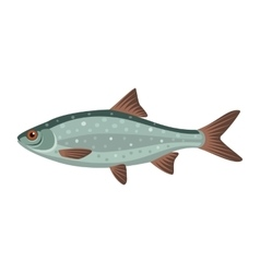 Common roach rutilus fish vector