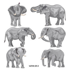 elephant3 vector image