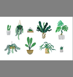 green tropical house plant set isolated vector image