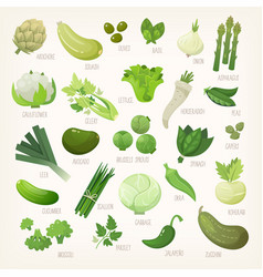 Variety of green and white fruit and vegetables vector