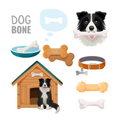 Dog bone promotional poster of zoo market goods vector