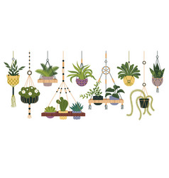 plants in hanging pots set flowerpot indoor vector image